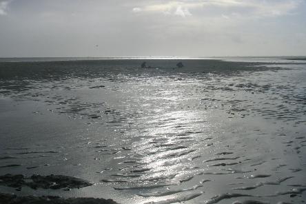 Sorties Nature - Petite Mer de Gâvres - Séjour en chambres d'hôtes Bretagne Sud - Les Jardins du Cloestro - Kervignac